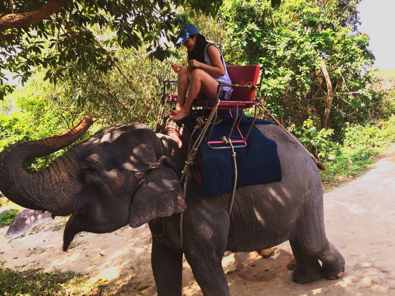 Thailand Animal Animal Photography Activity Elephant Trekking Elephant Neither Women