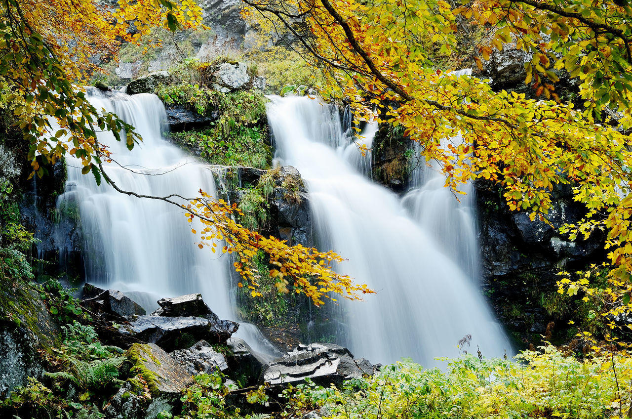 Autumn Colors Foliage, Vegetation, Plants, Green, Leaves, Leafage, Undergrowth, Underbrush, Plant Life, Flora Forest Landscape Mountain Tree Waterfall