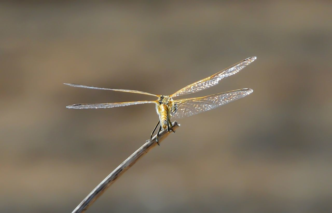 Animal Themes Animals In The Wild Backwards  Close-up Day Dragonfly💛 Insect One Animal Outdoors