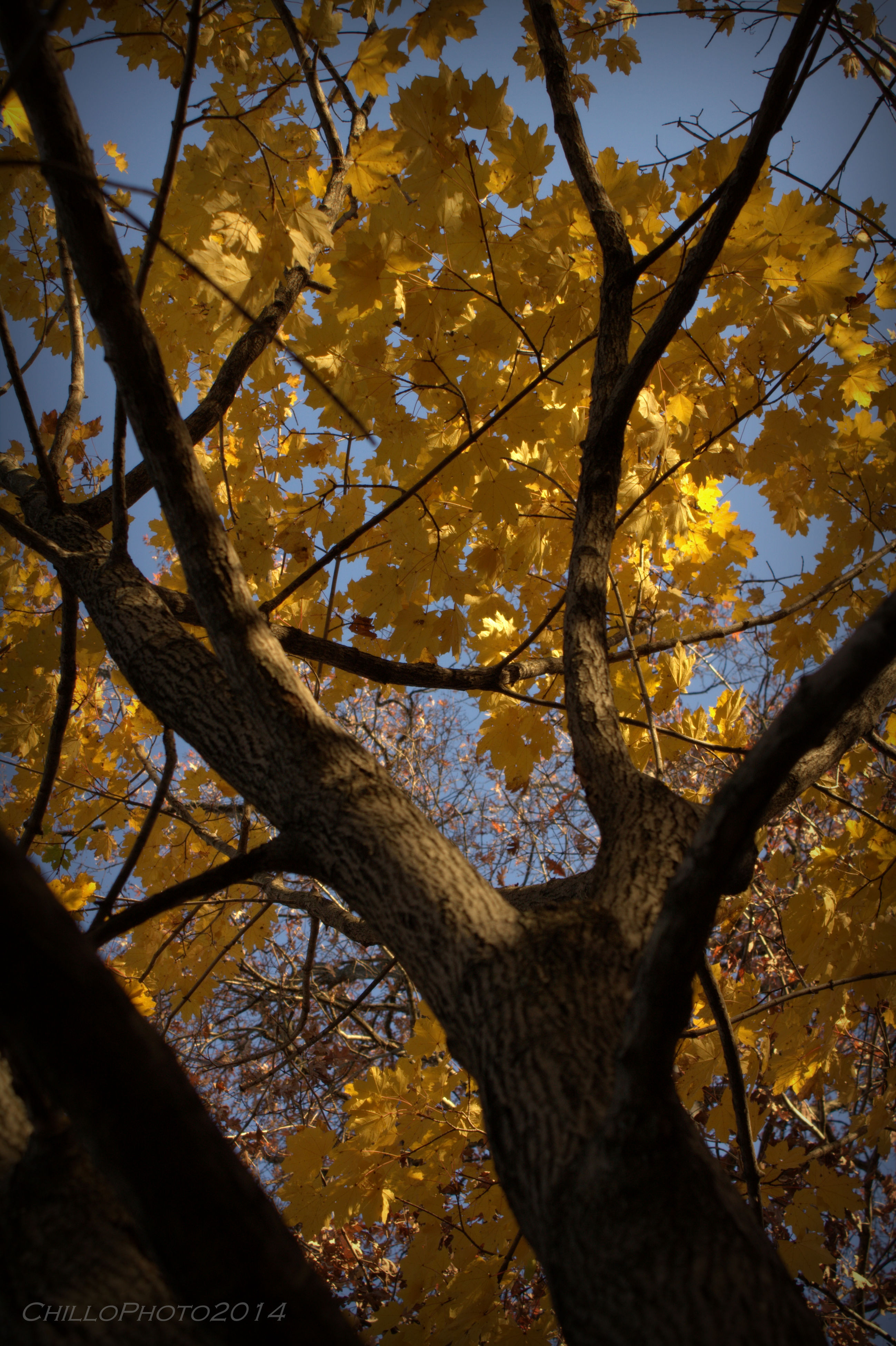 tree, low angle view, branch, autumn, growth, yellow, nature, tree trunk, sky, change, beauty in nature, built structure, tranquility, architecture, no people, day, outdoors, season, building exterior, clear sky