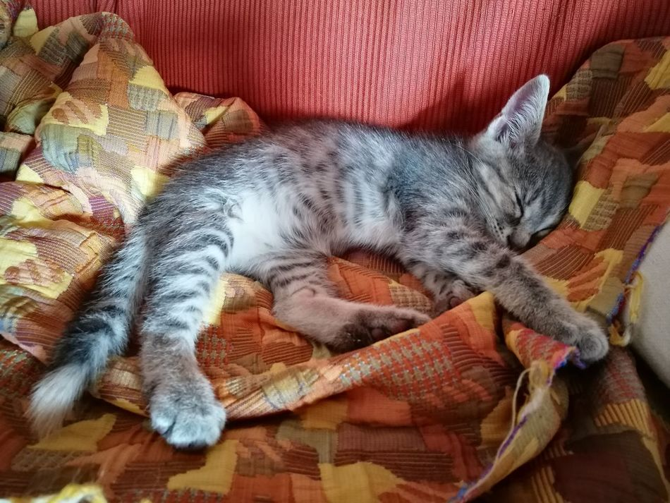 Domestic Animals Pets Animal Themes One Animal Mammal Domestic Cat Feline Relaxation Indoors  No People High Angle View Resting Sleeping Lying Down Close-up Day Kitten Cute Kitty Cat Cat Lovers Kitty Love♥ Cats Of EyeEm Cat Photography Multi Colored Kitty