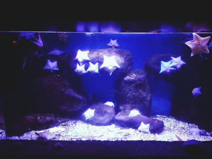 московскийзоопарк московский зоопарк морские звезды морские жители аквариум