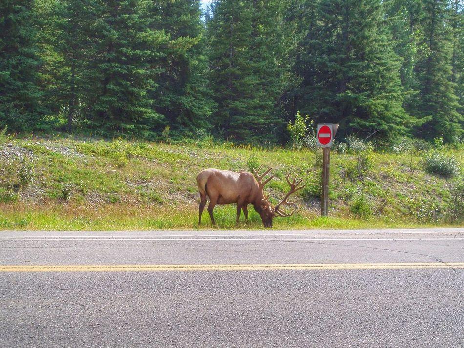 Beautiful stock photos of deer, Animal, Animal Themes, Animals In The Wild, Antler