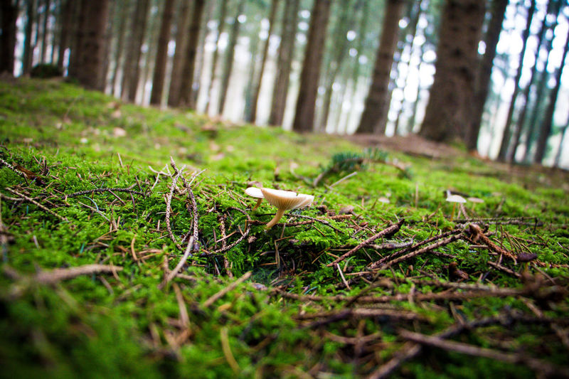Mushroom in the forest Animal Themes Beauty In Nature Day Forest Forest Photography Forest Trees Forestwalk Germany Growth Landscape Mushroom Mushroom_pictures Mushrooms Nature No People Outdoors Tree Tree Area Tree Trunk Wood WoodLand Woods