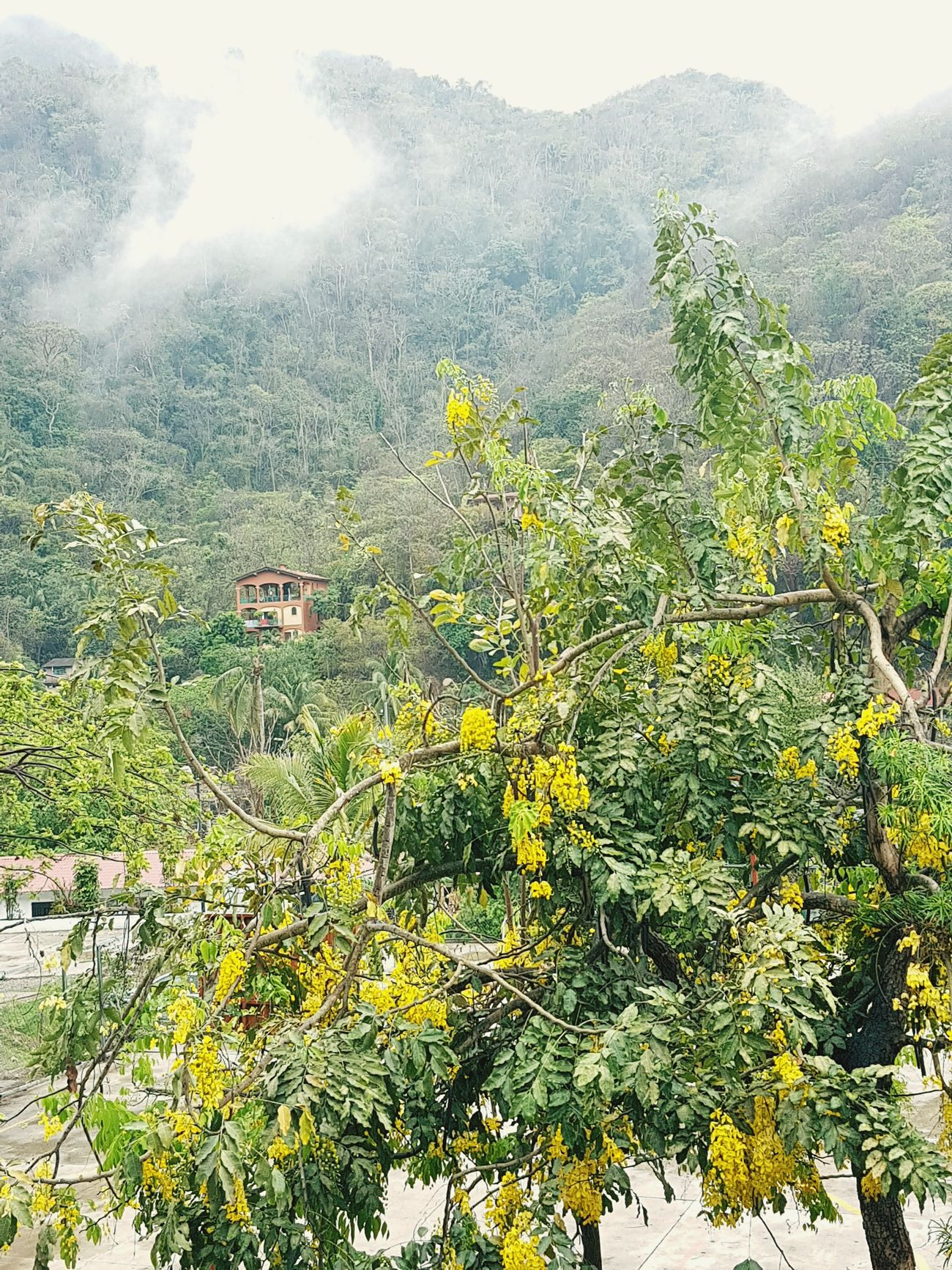 House Nature Mountain Outdoors Beauty In Nature Day Scenics Tree Water Sky Freshness Growth Grass Close-up Yellow Vallarta,Mexico Green Nature