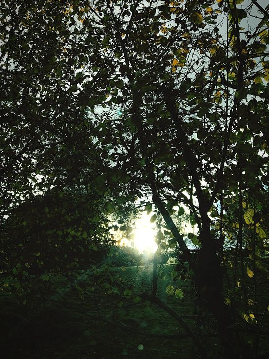 Tree Nature Growth Beauty In Nature Low Angle View Sunlight The City Light No People Scenics Sun Outdoors Forest Day Branch Sunbeam Sky Asturias Autumn🍁🍁🍁 Green Color Sunlight Road Nature Nature Photography Natural Beauty Perfect EyeEmNewHere