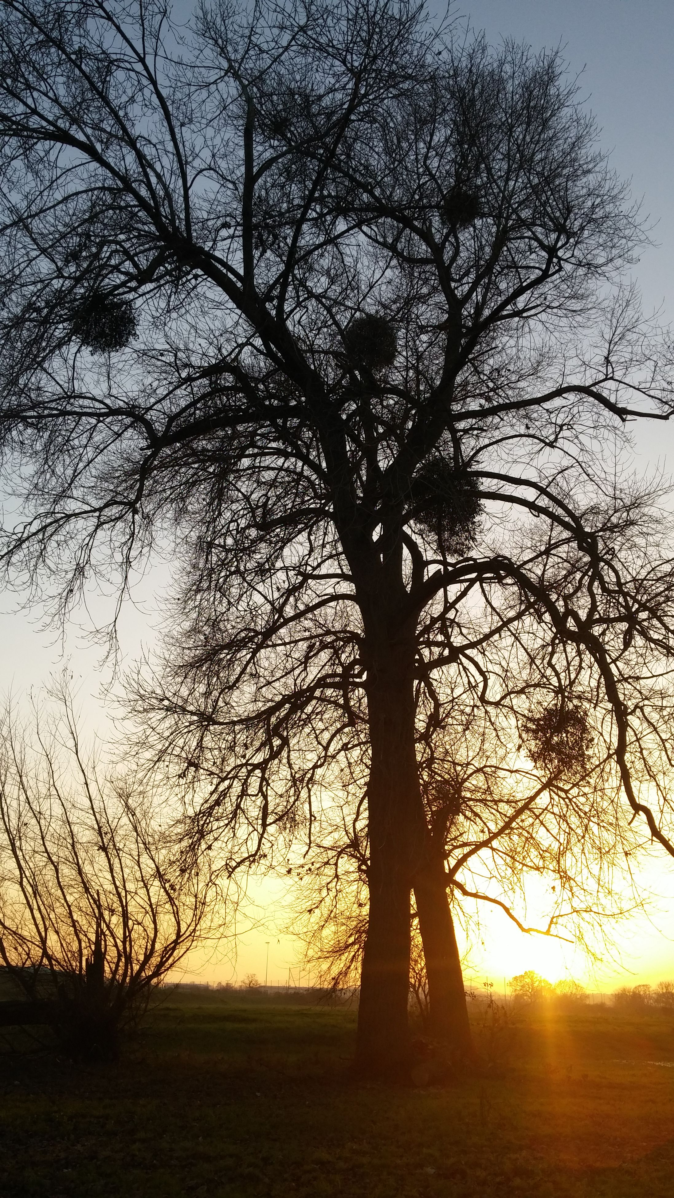 bare tree, tree, branch, silhouette, sunset, tranquility, tranquil scene, sky, water, scenics, nature, beauty in nature, tree trunk, lake, reflection, dusk, growth, no people, idyllic, outdoors