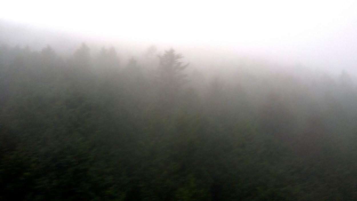 Mist Trees In Mist Nature Japannature Bnw Bnw_collection Bnwjapan Bnw_city Bnw Nature Shizuoka,japan Japan Winter2016 JapanDec2016
