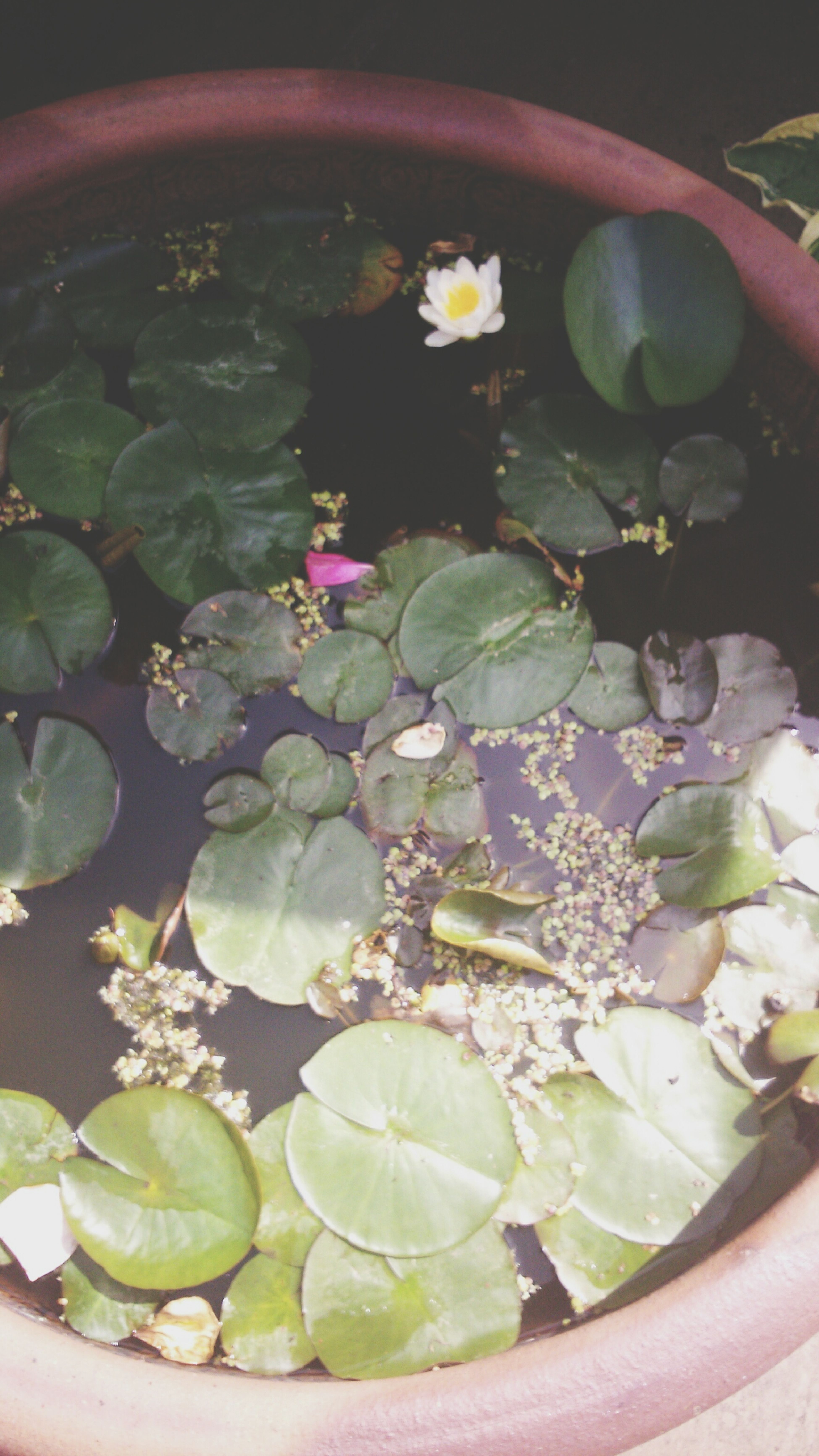 Pond in pot Taking Photos Flower Power water feature Nature_collection Change Your Perspective The Purist (no Edit, No Filter) Day Out