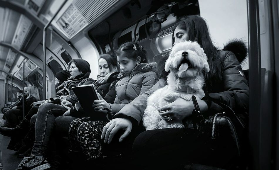 Indoors  Adults Only People Adult Day Dog❤ Pet Streetphotography City Togetherness Close-up