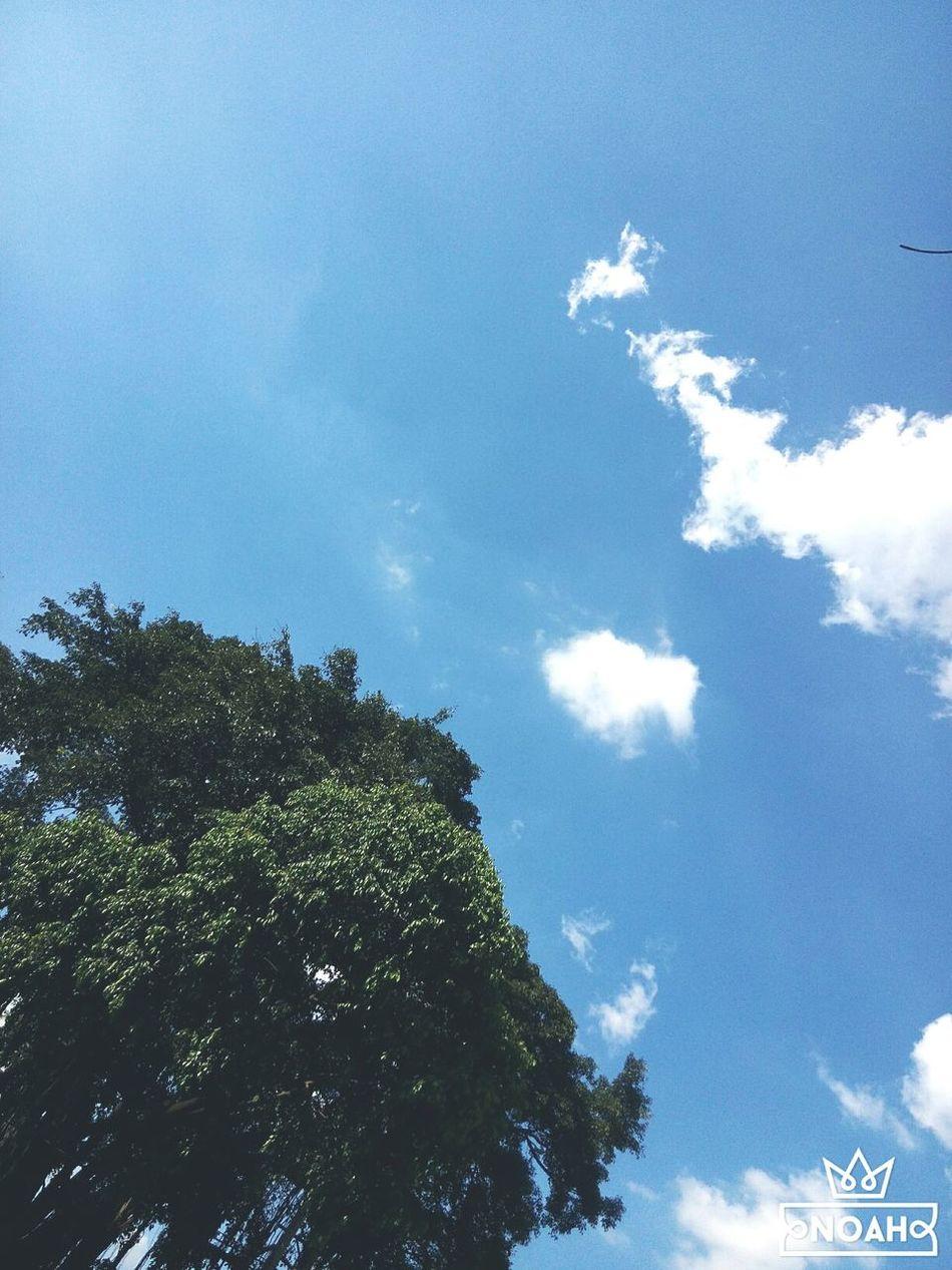 Sky Tree Cloud FreeTime 07062016