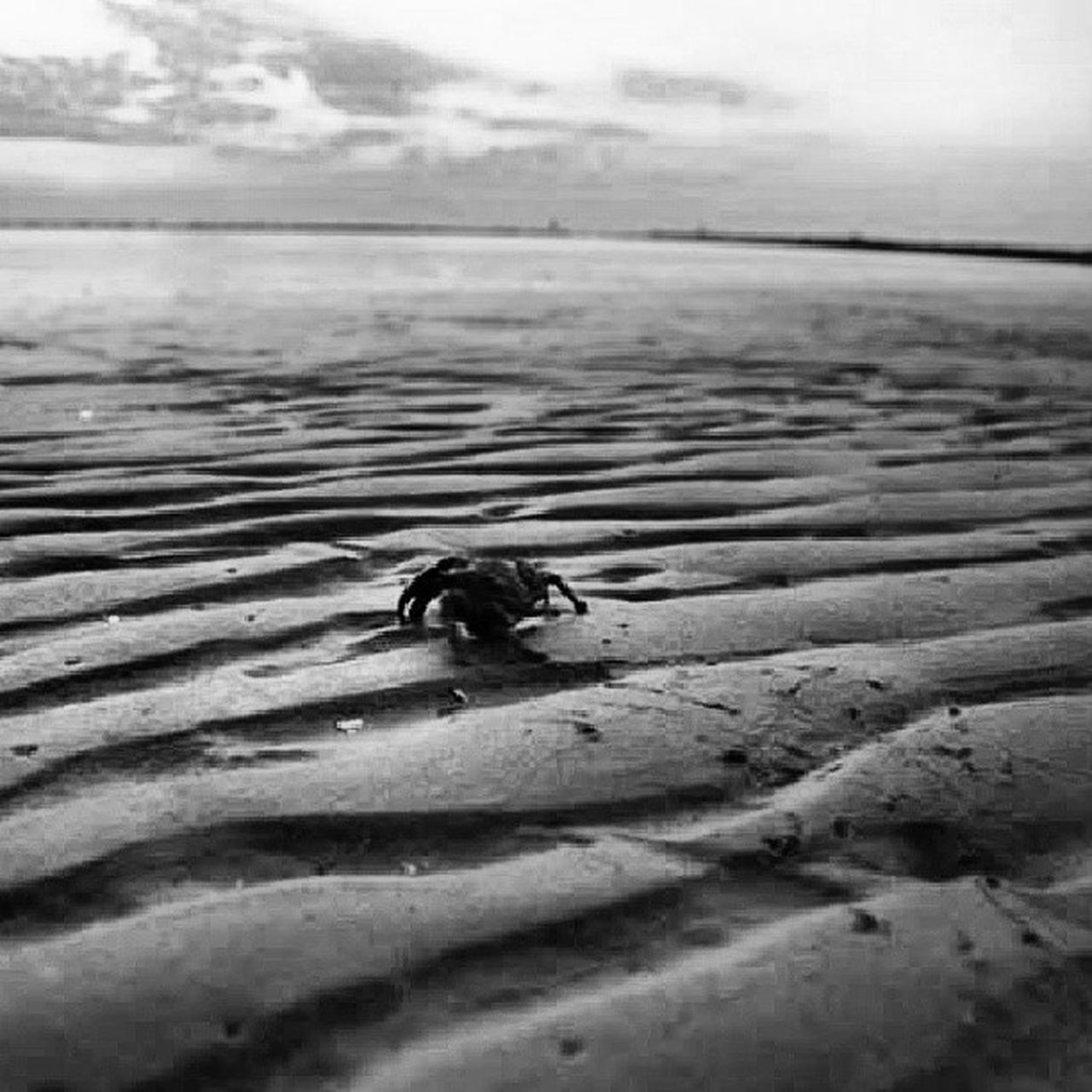 beach, sea, sand, animal themes, one animal, animals in the wild, water, nature, outdoors, no people, day, sky, animal wildlife, sea life, horizon over water, close-up