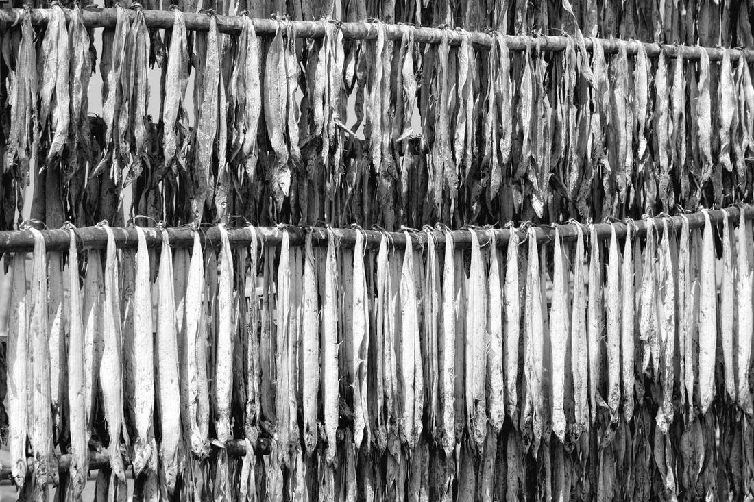 Abundance Agriculture Bamboo - Material Close-up Day Dry Dry Fish Dryness Farm Fence Fishes Food In A Row In Front Of Indian Large Group Of Objects Protection Repetition Seafood Sundried Weathered Zoology Black And White EyeEm Eyeem Collection