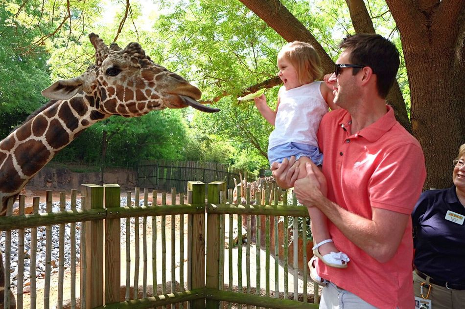 Beautiful stock photos of lustige giraffe, togetherness, two people, bonding, people