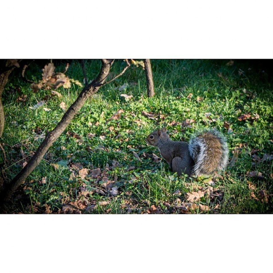 Torino Parcovalentino Nikon Nikon3200 scoiattolo 2014