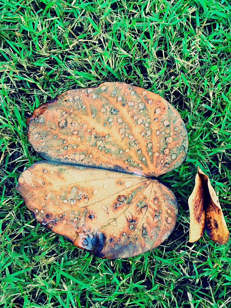 Leaves Leaves_collection Leaver Leaves🌿 Leaves On The Ground Hello World Taking Photos Snapshots Of Life Capture The Moment Still Life Photography Photography Helloworld Nature Still Life