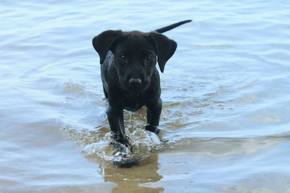 Beautiful stock photos of puppy, Animal Themes, Beach, Black Color, Day