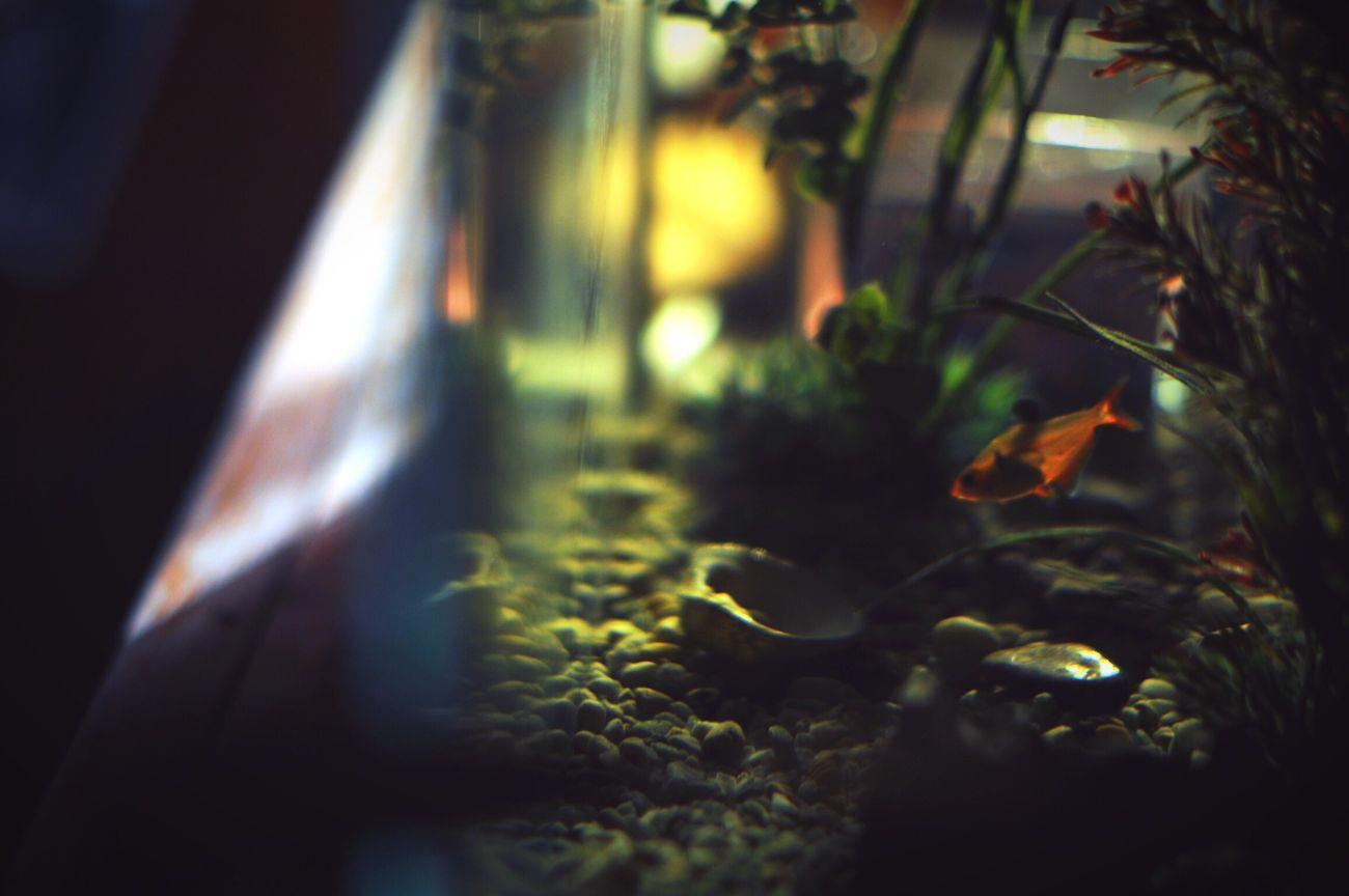 Florence the fish Aquarium Trough The Glass Turquesa Fish