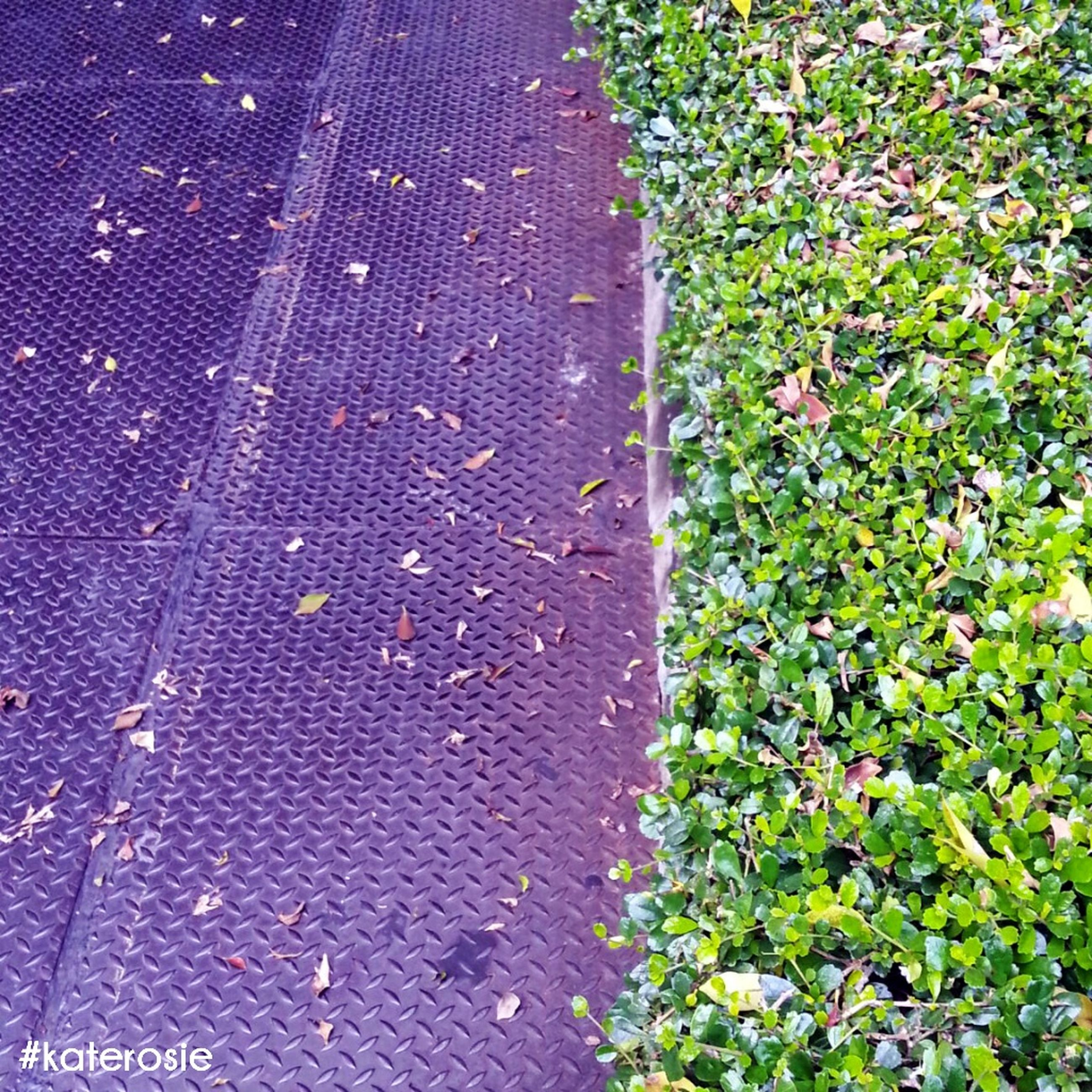 high angle view, leaf, plant, growth, field, green color, nature, autumn, day, grass, outdoors, fallen, no people, sunlight, dry, change, leaves, road, ground, season