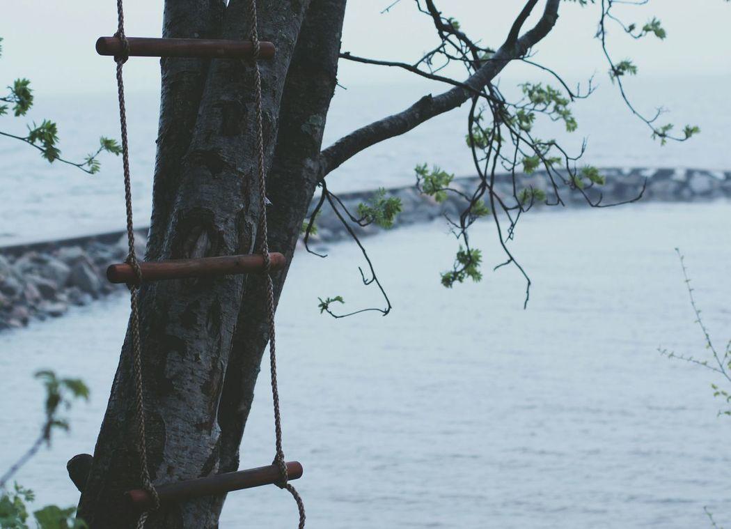 Thinking of childhood. Hugging A Tree EyeEm Nature Lover Fog Notes From The Underground Eye4photography  Enjoying Life