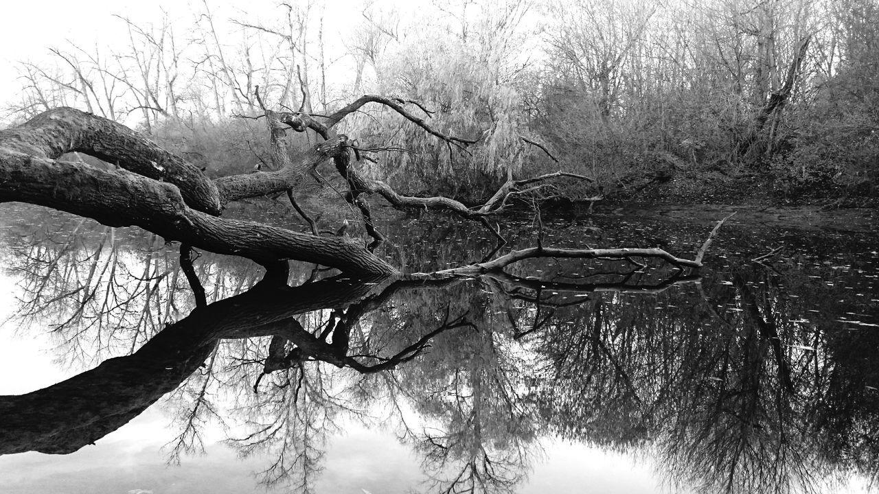 Zweifach /// Spiegelung der Natur im Altrhein bei Mannheim