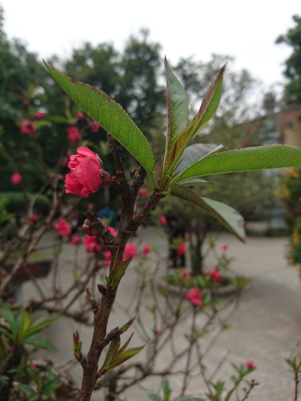 plant, growth, leaf, focus on foreground, nature, green color, freshness, flower, beauty in nature, no people, fragility, day, outdoors, close-up, tree, flower head