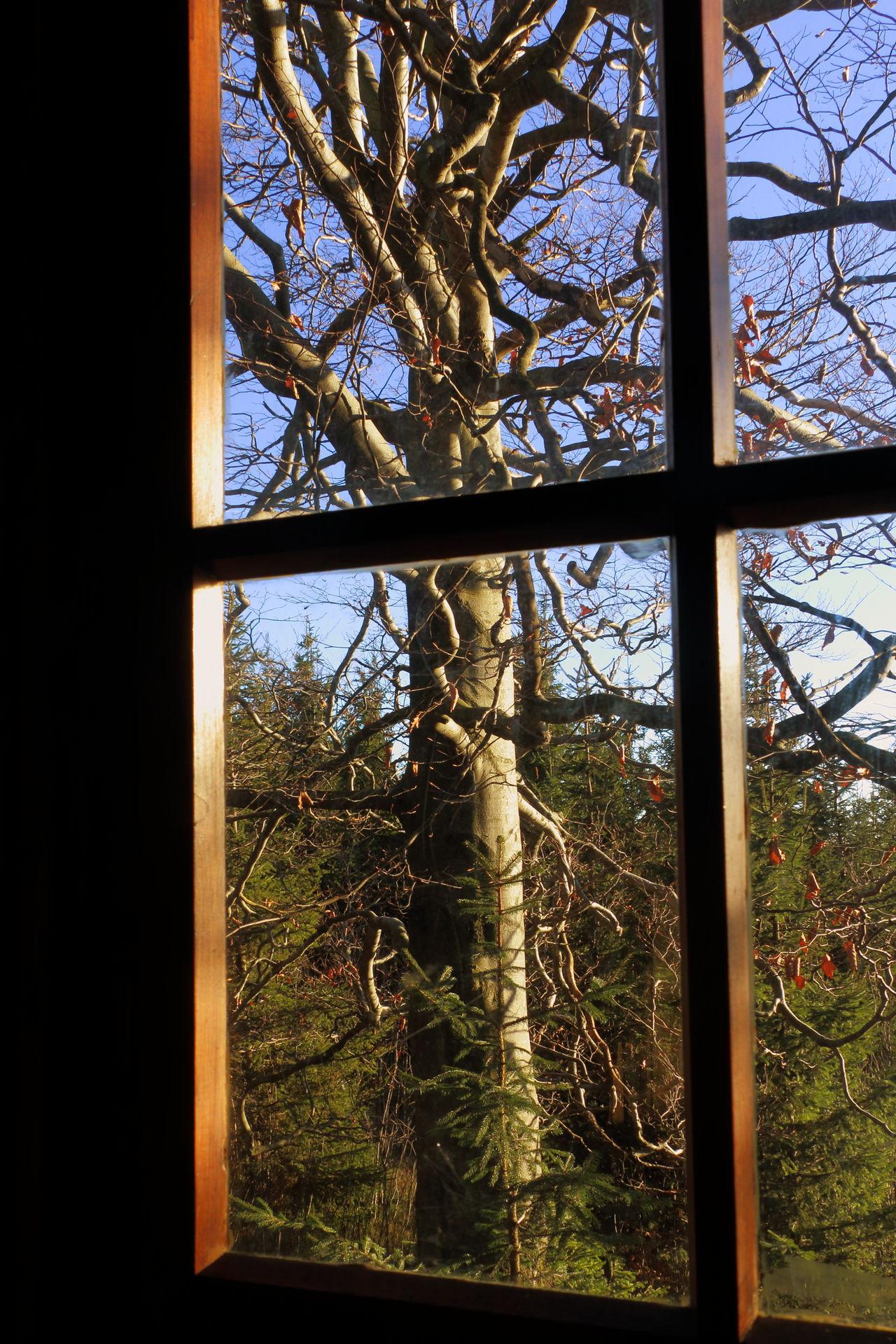Poderatignom Ausblick Baum Blick Aus Dem Fenster Dark Dunkel Fenster Himmel Licht Light Natur Nature Sky Tree View View Out My Window Window