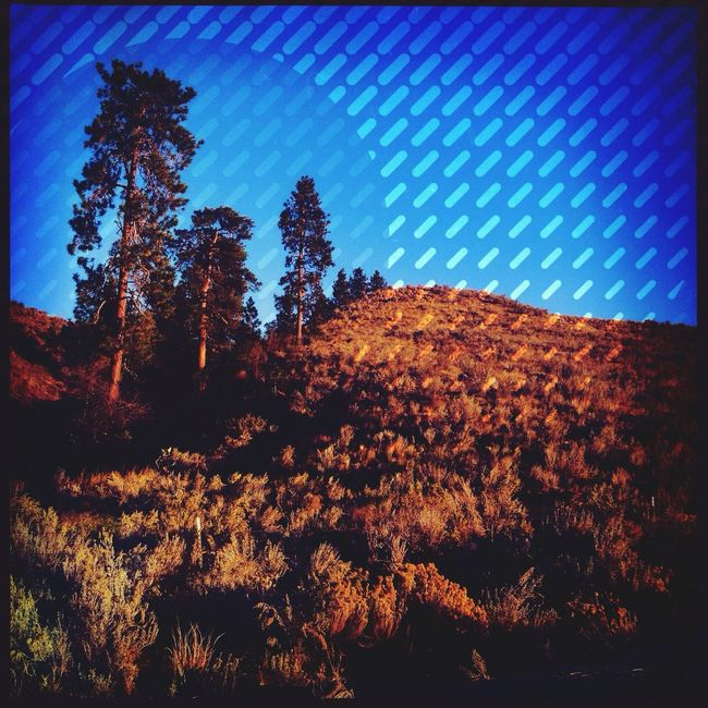 Experimenting Leonie Filter Trees Nature Editing