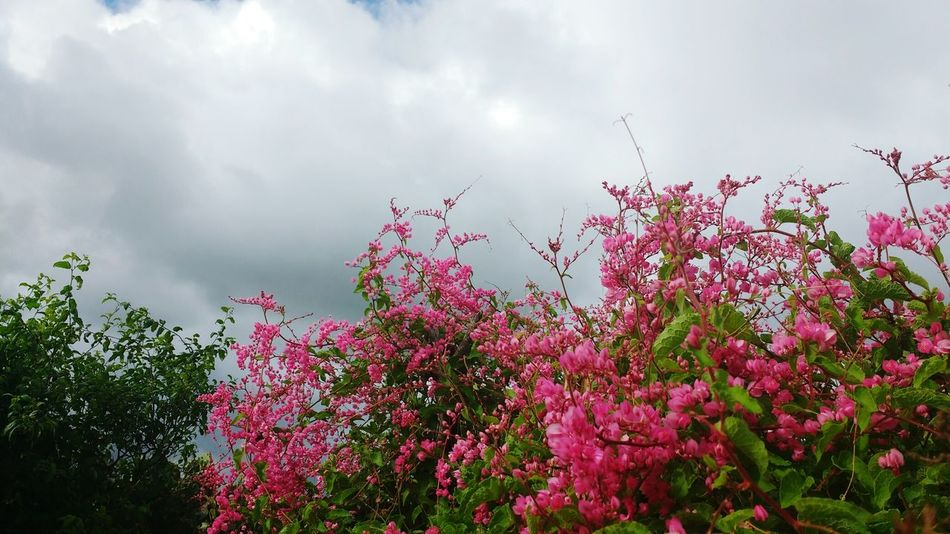Farm Eye4photography  Beatiful Nature Flores Flower Photography Sky Rainy Sky And Clouds Nature_collection Beauty In Nature