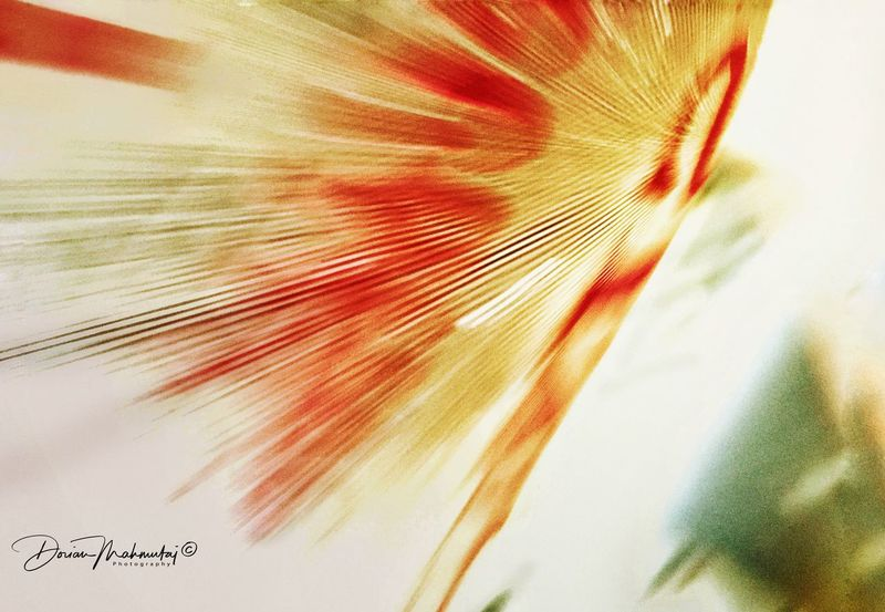 Blurred Motion Close-up Art Inspirations Postmodern  Vision ShotOnIphone Abstractart Astral Etheric Ethereal Fine Art Photography IPhoneography Multi Colored Artography Abstract Iphone6s Art Is Everywhere Artforsale EyeEmNewHere