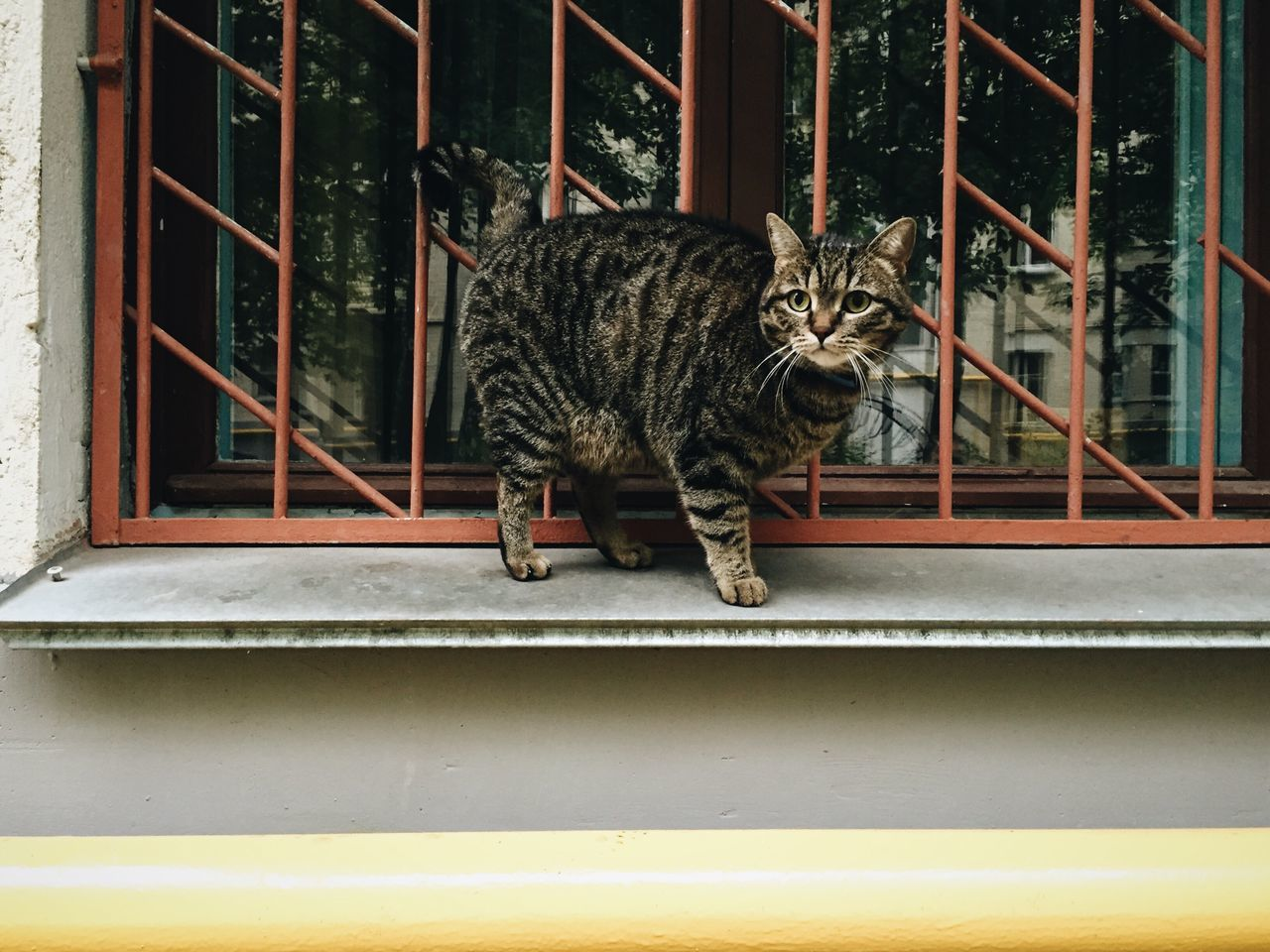 Cat Nice View I Love Cats Streetphotography Looking At Camera Animals Domestic Cat Cat Lovers
