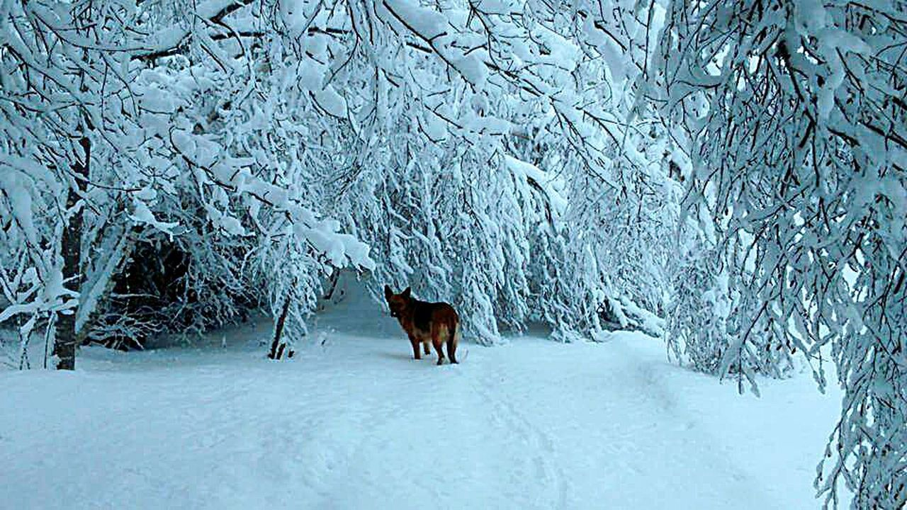 Enjoying this day. Taking Photos Hanging Out Hello World Snowcoveredtrees Beautiful Nature Snow Day Snow_collection Snow ❄ Nova Scotia Nature Photography Incredible Moment Trees Coldoutside Snow Covered Dogs In The Snow Frozen Nature Vacation Pic! Shadows & Lights