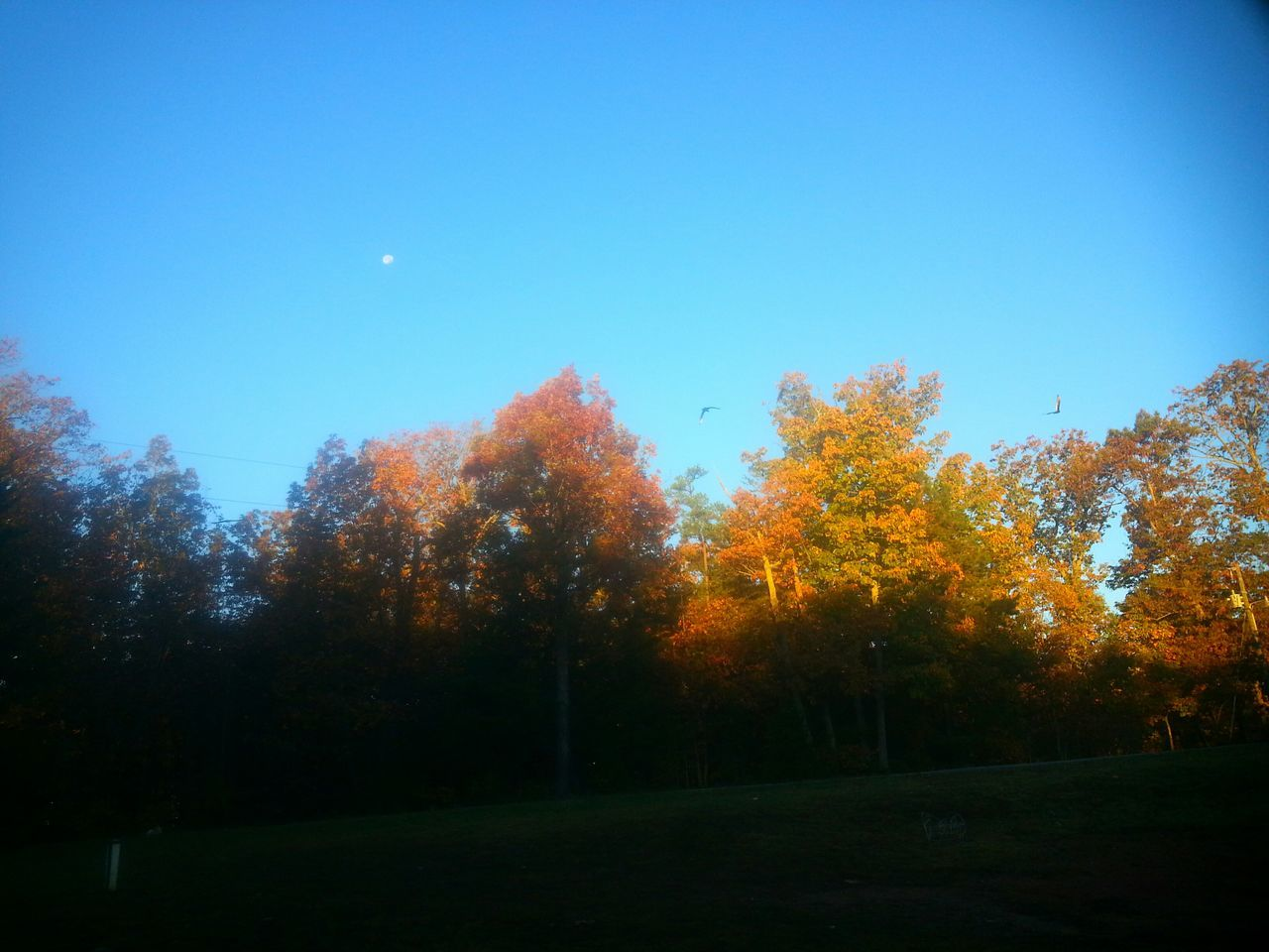 Morning Sky Moon Flying Birds Ducks And Geese United States Of America Gretna, Va Usa Virginia EyeEm Nature Lovers Tupponce Photography David Tupponce Autumn Colors Light And Shadows The Beauty Of Fall