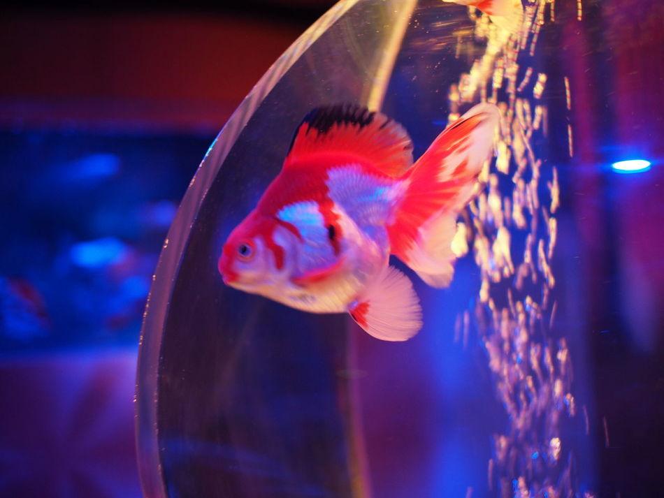 Aquarium Water_collection