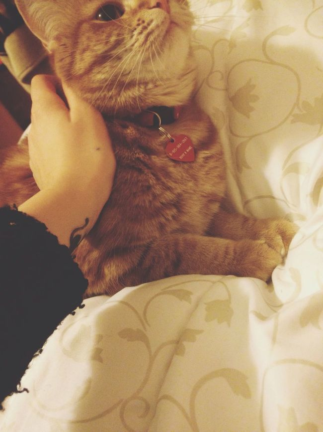 Meow😸 Cat Ilovecat Meow