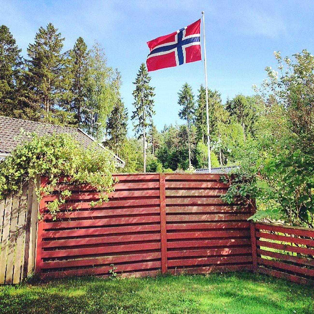 Ya en Gran Canaria. En los próximos días comenzará mi oleada de fotos de mis vacaciones por Noruega, espero que les gusten. Aquí tienen, cómo no, la bandera de dicho país. Noruega Norway Norge Flag Bandera NorwegianFlag Country Forest Bosque Verano Summer Igers IgersOfTheDay IgersNorway Instagramers SunnyDay Trees Árboles BestOfTheDay