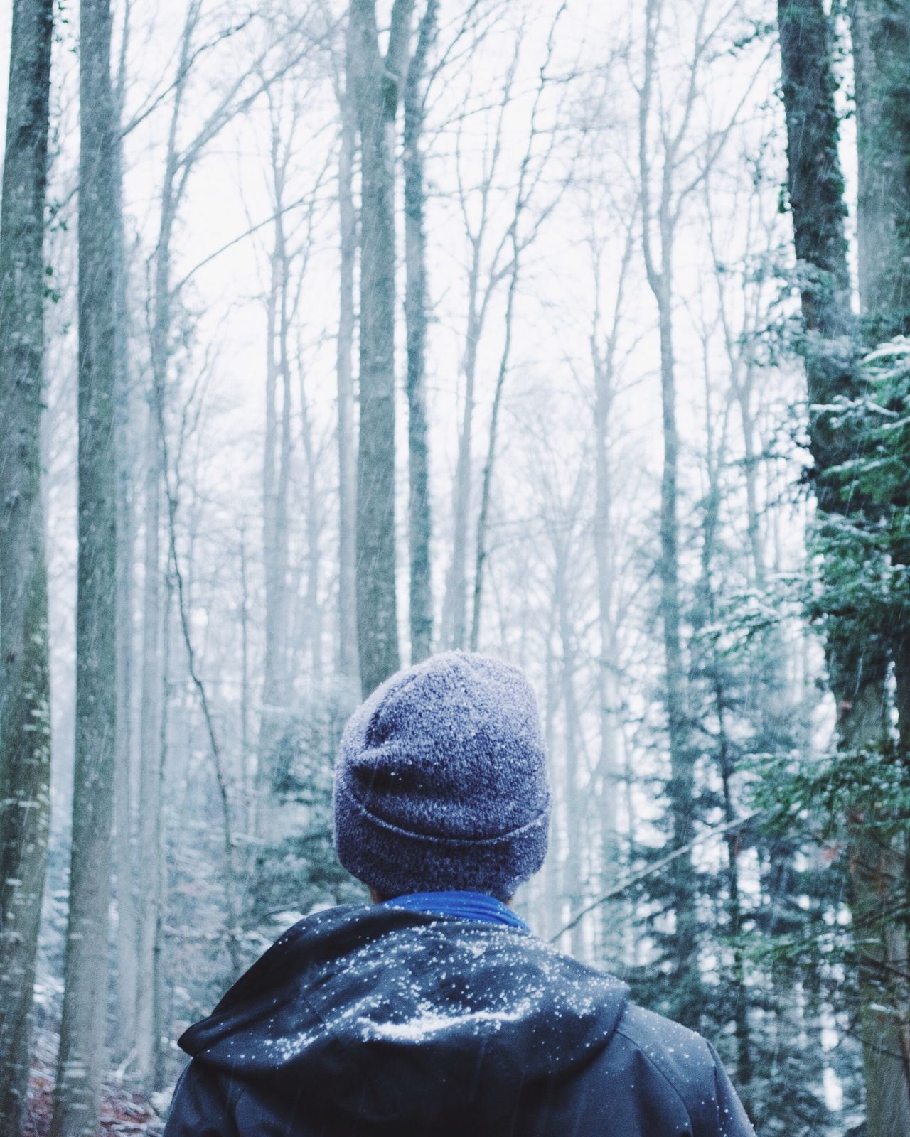 Beautiful stock photos of man, Branch, Cold Temperature, Day, Forest