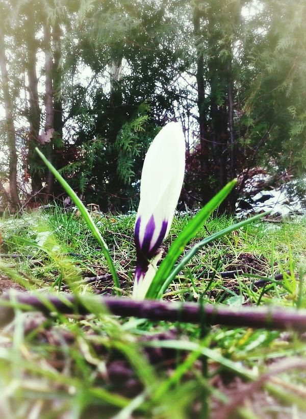 Still Life Nice One Krokus Coldweather Coldplay Spring Has Arrived Too Cold Outside Not Funny  Want Spring Frame It!