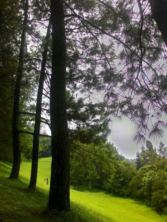 Green Forest Nature Asus Zenfone Photography