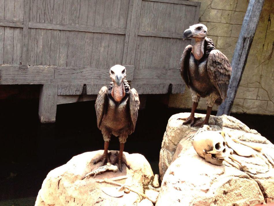 Vulture Safari Sentosa Ride