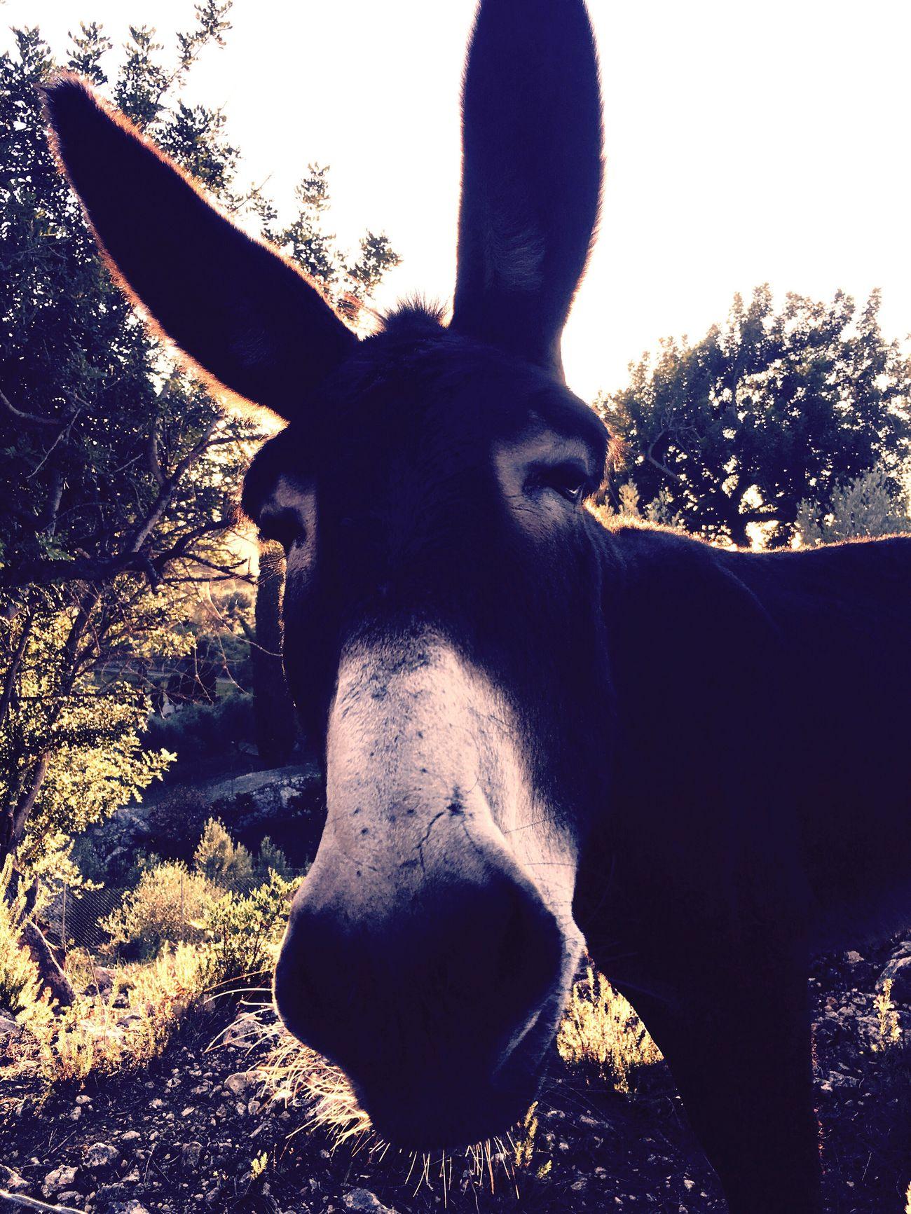 One Animal Looking At Camera Close-up Nature Donkey Donkey Time Animal Newfriends Makesmesmile Curiosity