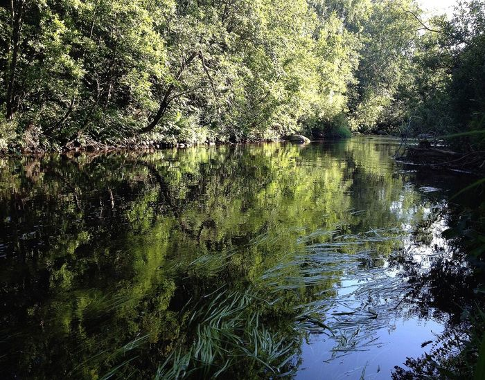 EyeEm Nature Lover Water_collection Reflection Trees