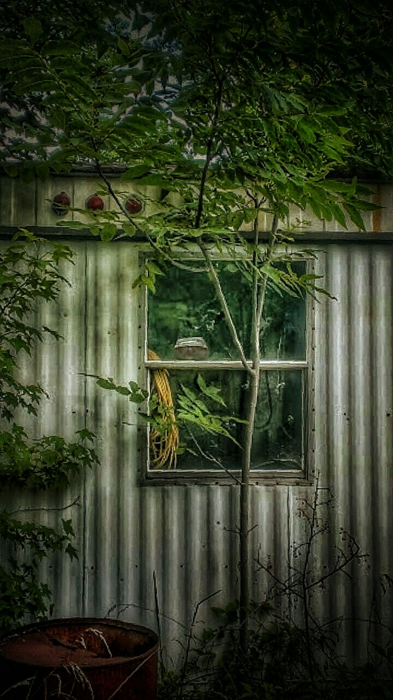 I Know Why The Caged Bird Sings... Tree Creeper Plant Abandoned Places Windows Abandoned Abandoned Buildings Building Exterior Abandoned & Derelict AMPt - Abandon Tresspassing For Art Broken Window Weathered Rural America Rural Decay Damaged Creepy Atmoshpere Rural Scene Window House Residential Building Rural Exploration Ivy Wall Deterioration Creepy Houses