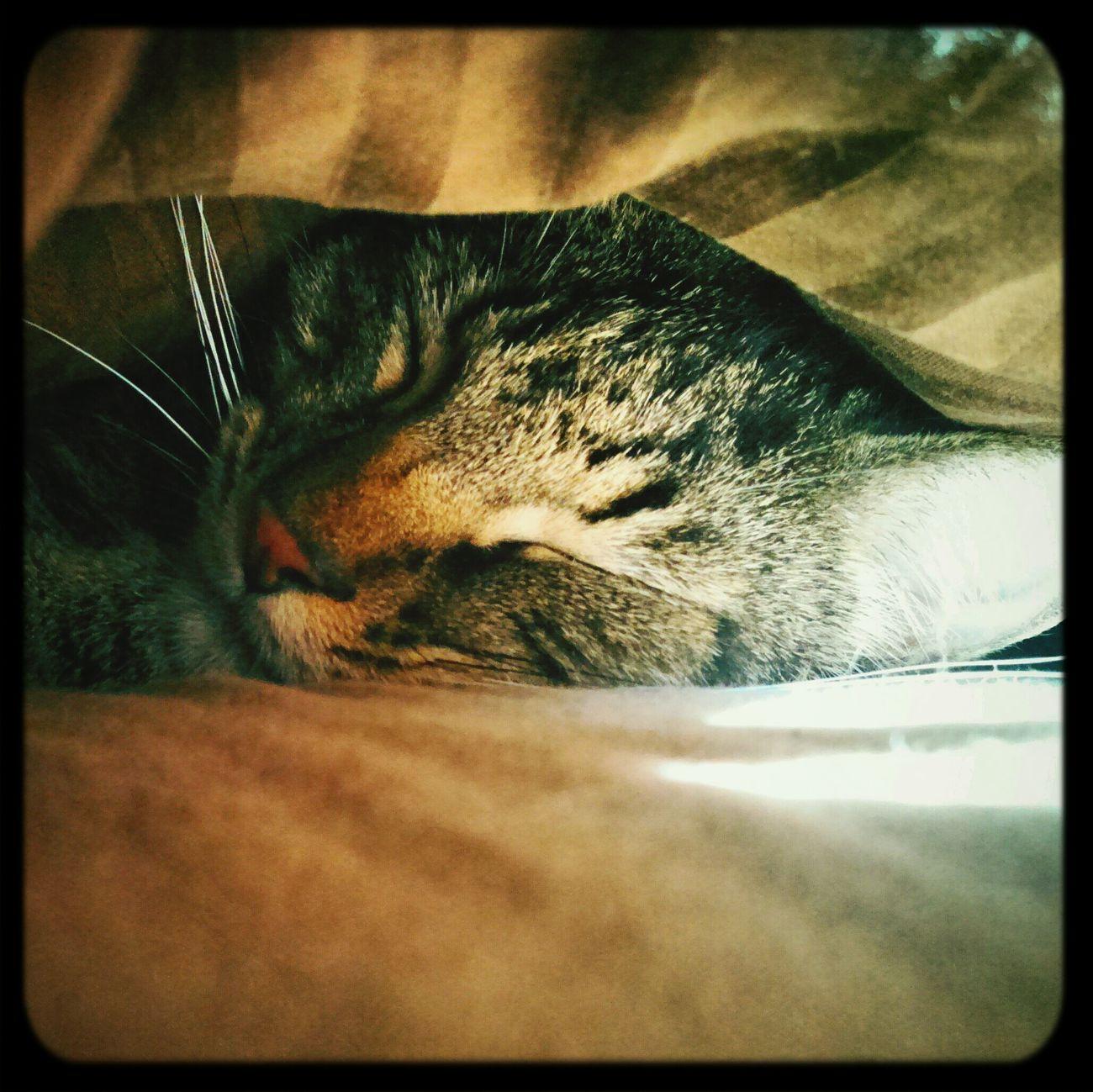 Face of an angel <3 Kittylove Fatcat