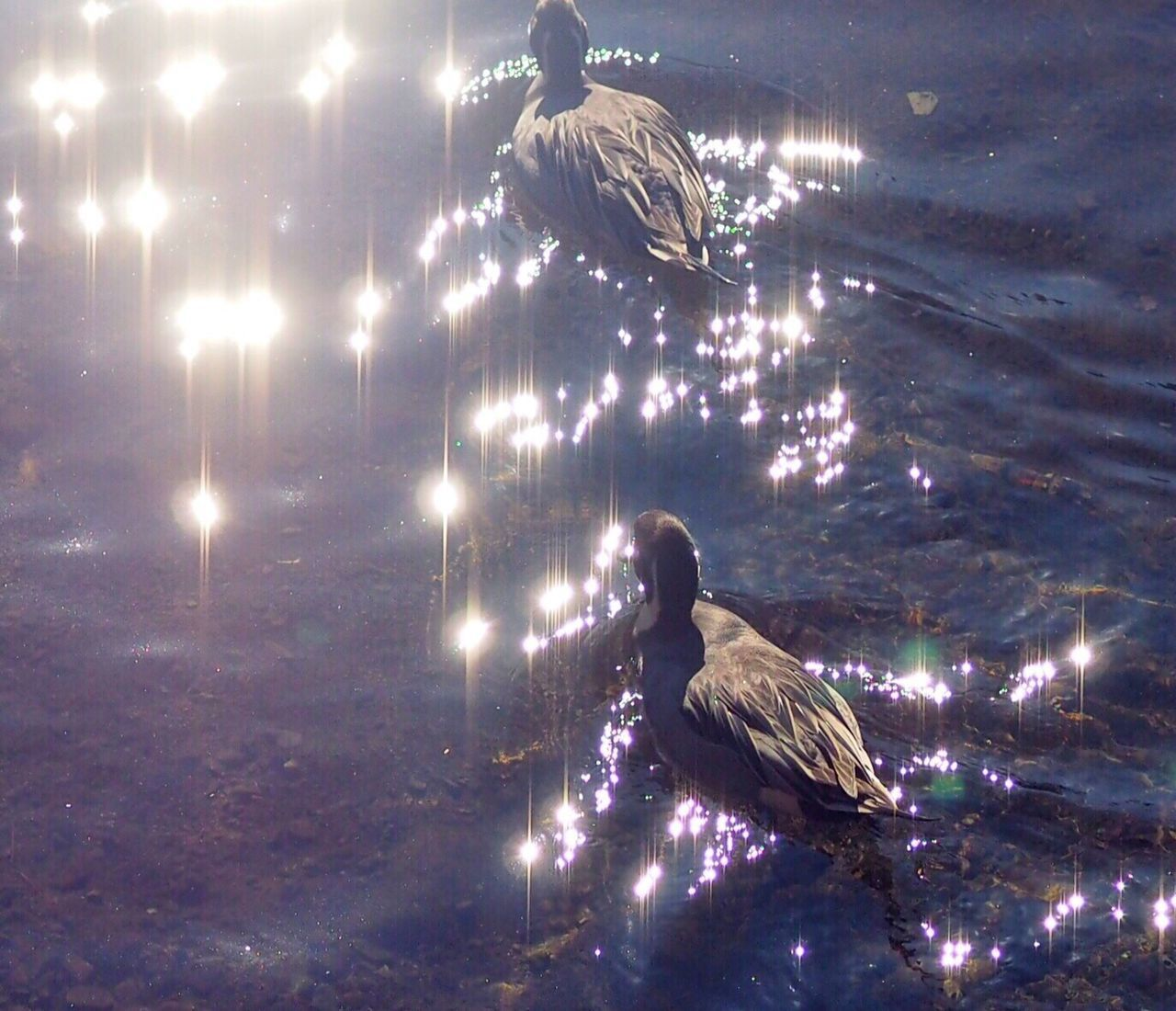 EyeEm Birds Birds Bird Bird Of Tokyo