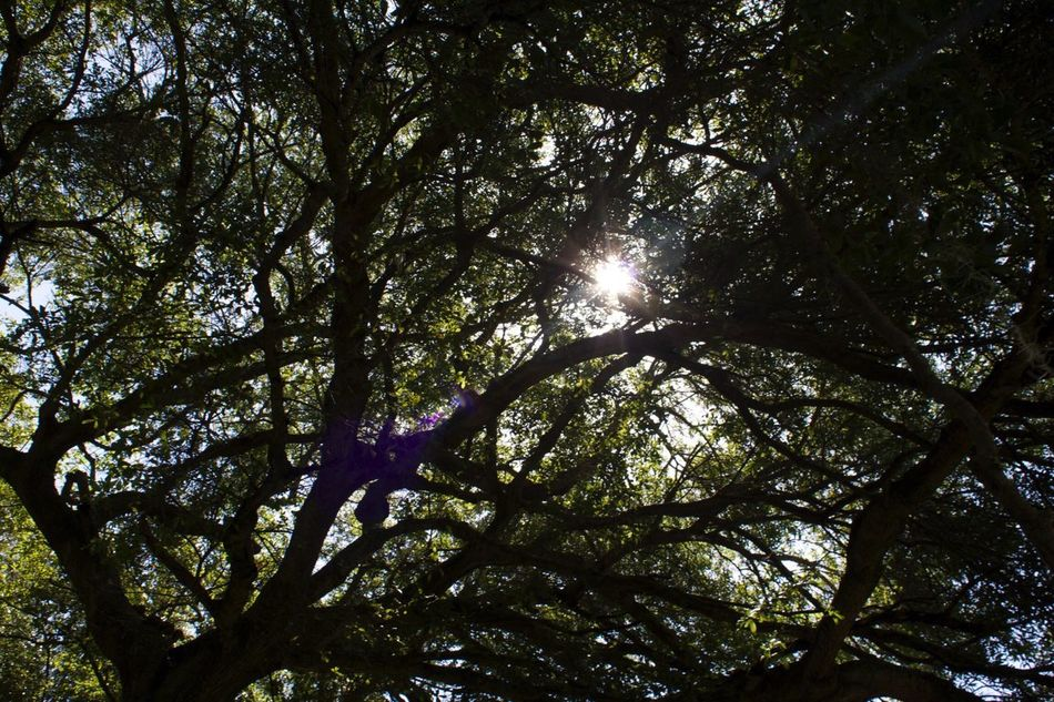 Tree Branches Leaves Light Sun Through Trees Sun Through The Trees Shadows Nature