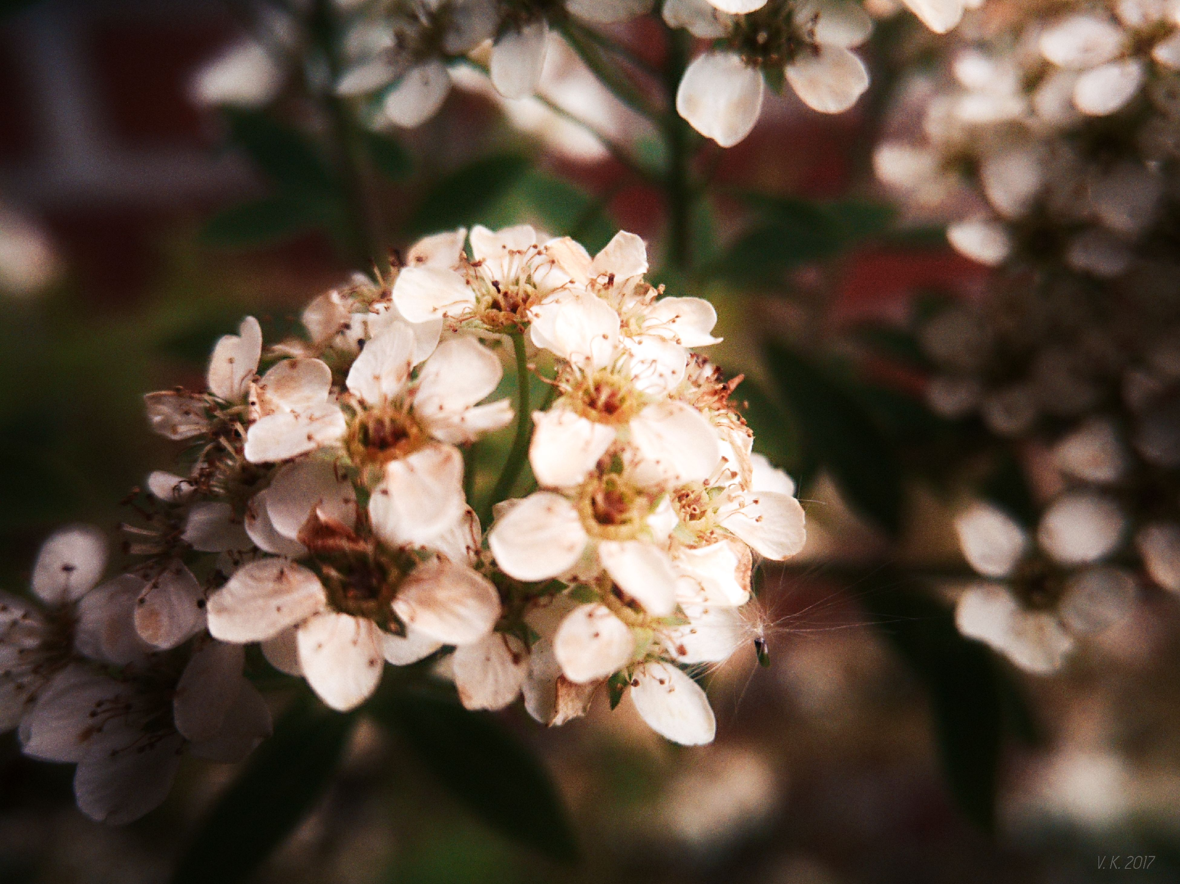 flower, nature, beauty in nature, fragility, growth, petal, freshness, flower head, close-up, plant, no people, springtime, blossom, outdoors, day, plum blossom
