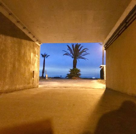 #palm_tree #blue_sky I see a blue sky from within the tunnel. #blue #sky #tunnel #escape #the_way_out #path_to_freedom Mysterious Palm Tree Tunnel Escape The Way Out