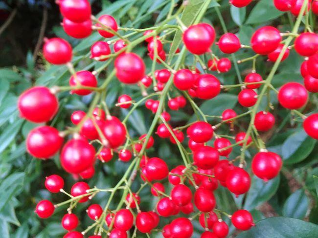 Berries Red Berries Bunch Bunch Of Berries