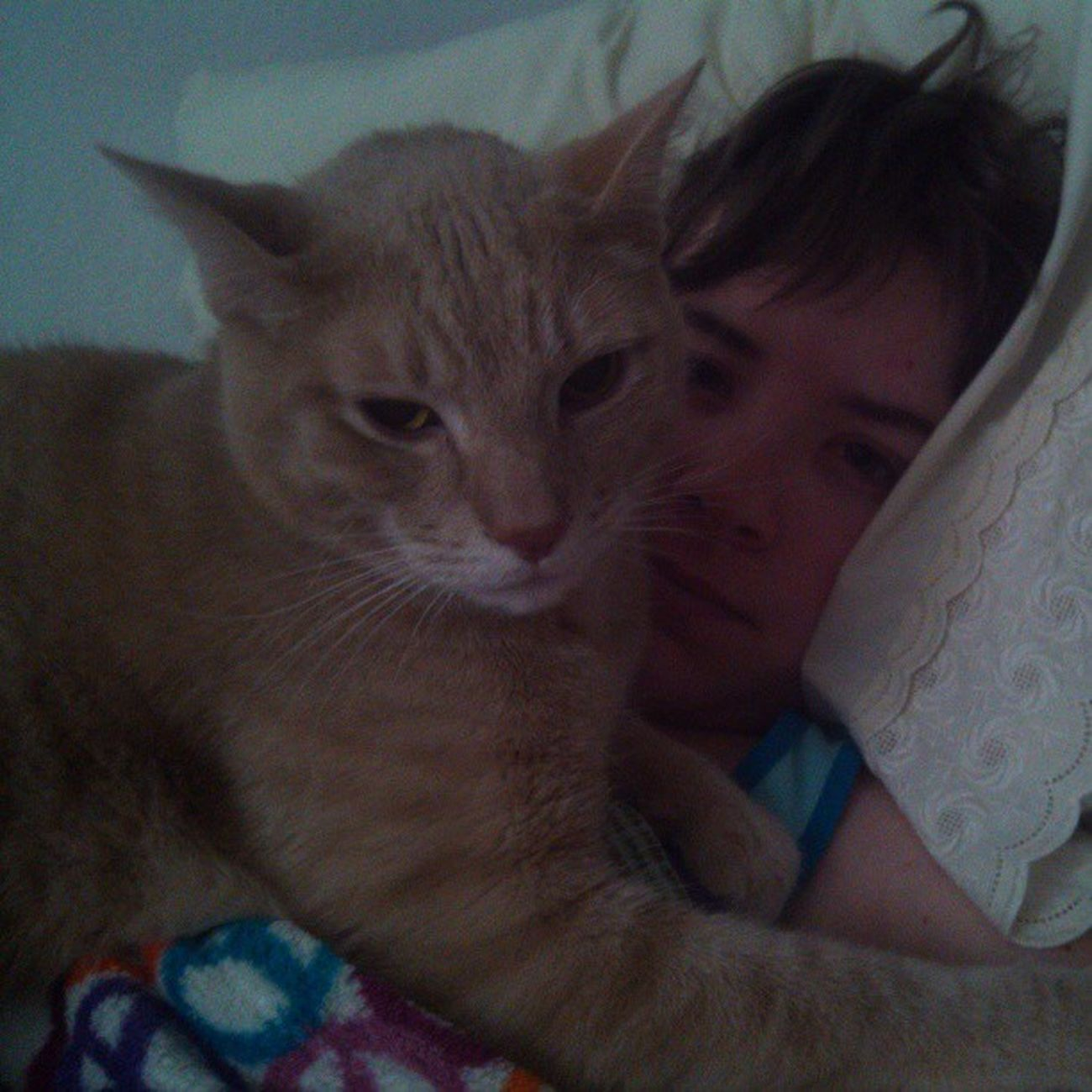 The morning smother Meow Snugglebuddy Kittylove